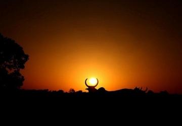 Concurso vai escolher as melhores fotos de bovinos em três categorias