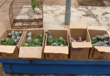PMA resgatou mais de 500 pássaros em um ano