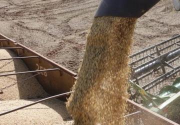 Dispara a comercialização de soja
