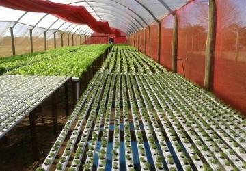 Distrito Verde recebeu o Dia de Campo da Horticultura