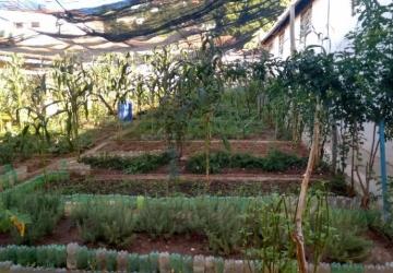 Klein quer novo horto florestal e reativação da Farmácia Viva