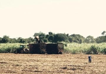 Agricultura tem estimado o valor bruto da produção