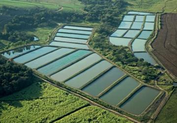 Mundo Novo pode se tornar o maior centro de pesquisas da piscicultura