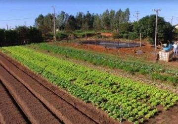 Cinturão Verde é referência na produção da agricultura familiar
