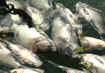 Produção de peixe deve gerar 2,7 mil empregos