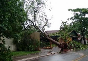 Chuva com ventos fortes derruba árvores e deixa população sem energia