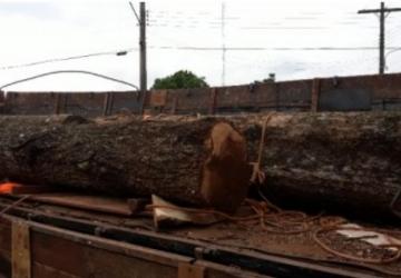 PMA apreende carga de toras de madeira ilegal